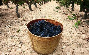 La cosecha 2009 de Rioja recibe la calificación 'Muy Buena'