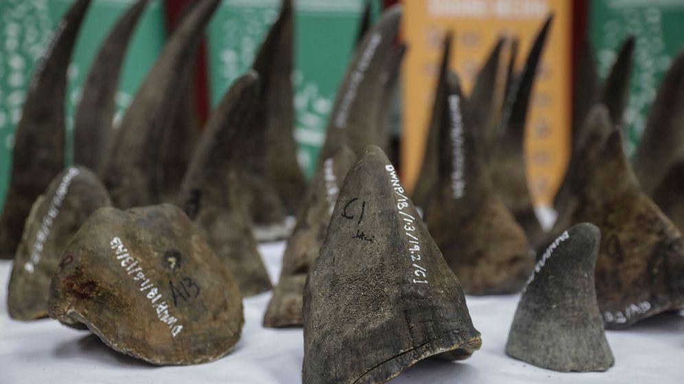Foto: Los cuernos de rinoceronte africano vuelven a poder comprarse en China (EFE/Fazry Ismail)