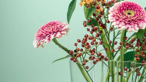 ¡Fuera malos rollos! Tener estas plantas en casa te ayuda a atraer la energía positiva