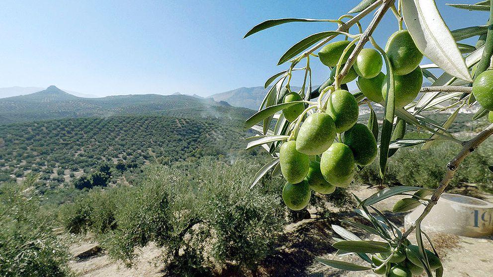 El aceite de oliva se 'dispara': los precios suben un 22% en solo un año