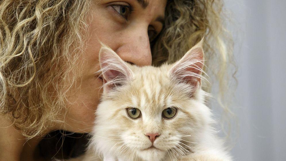 Foto: Los gatos sí necesitan a sus dueños, aunque parezca que no lo demuestran (EFE EPA/Salvatore Di Nolfi)