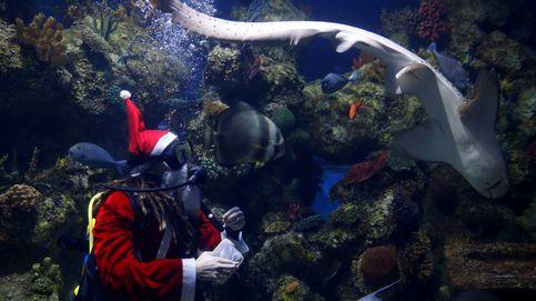 Navidad en el Acuario de Malta