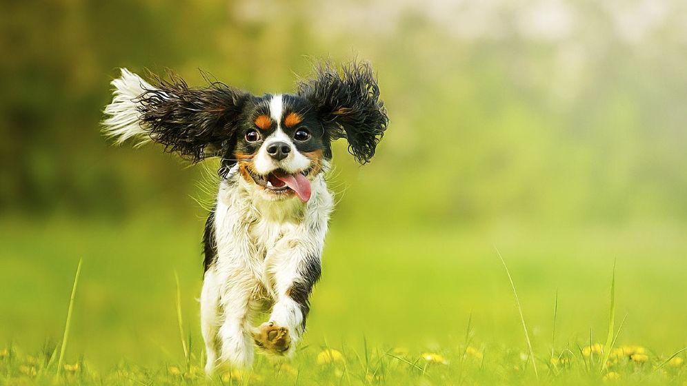 Foto: Te ha visto llegar y ya va corriendo a chuparte. (istock)