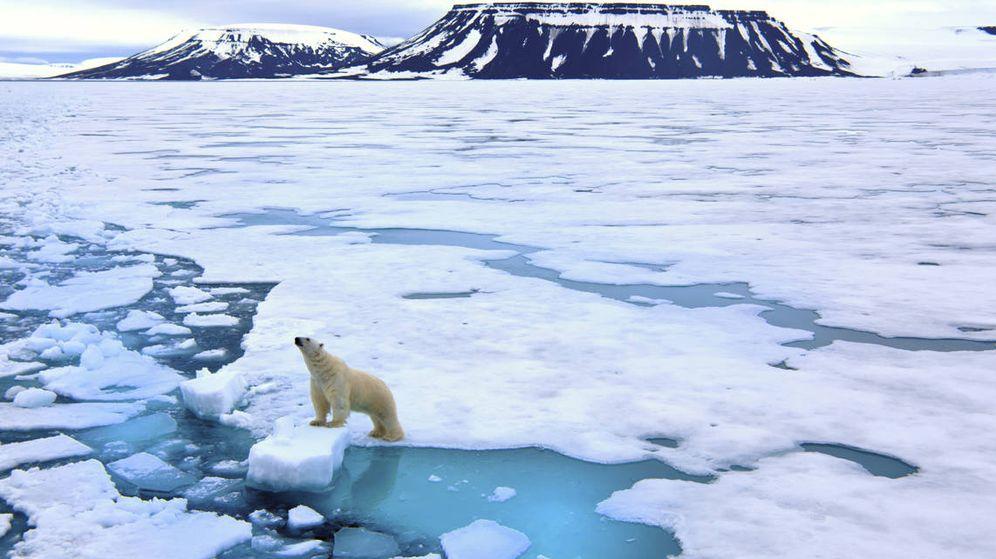 Foto: En el archipiélago de Svalbard viven más osos polares que personas (iStock)
