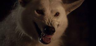 Post de 'Juego de Tronos': ¿Ha muerto Fantasma, el lobo de Jon Snow?