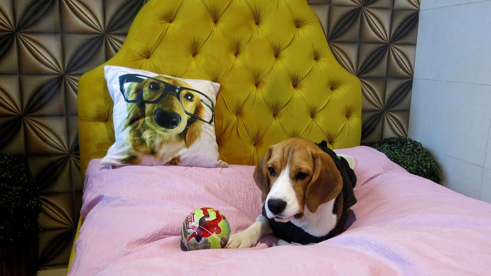 Foto: Dejar que nuestra mascota duera con nosotros es una gran decisión (EFE/Noemí Jabois)