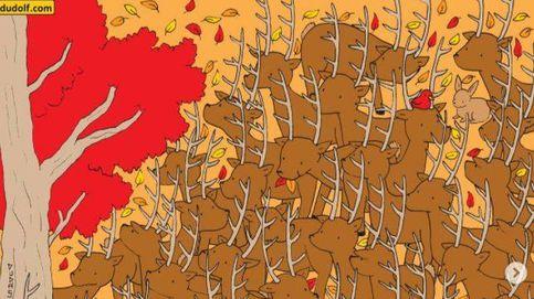 Acertijo viral: ¿eres capaz de encontrar a la cierva entre los ciervos?