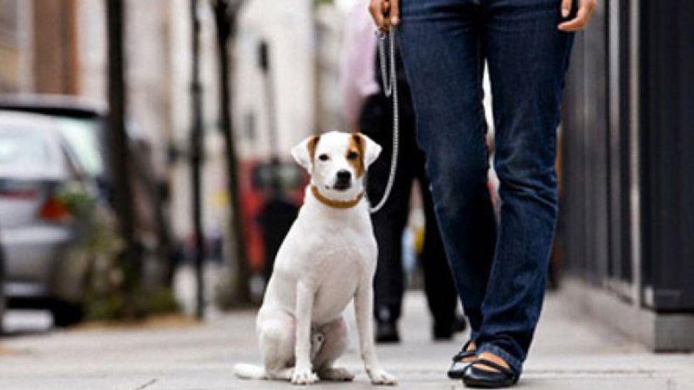 Las enfermedades que transmiten los animales domésticos y cómo evitarlas
