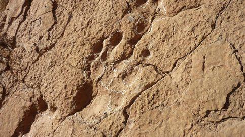 Hallan nuevos restos de dinosaurio 'pico de pato', un enigmático animal, en Lleida