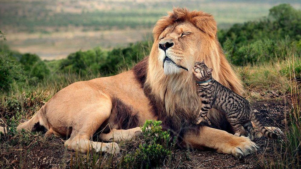 Foto: El cazador que temía a los gatos