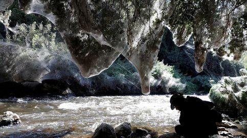 Este río de Israel sufre una extraña invasión: arañas gigantes