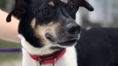 Zippy, el perro que murió en un incendio después de salvar a toda su familia