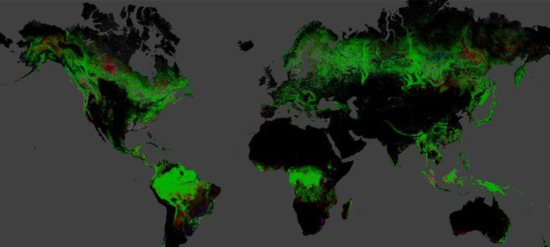 Foto: Un mapa interactivo de alta resolución muestra la pérdida forestal del planeta