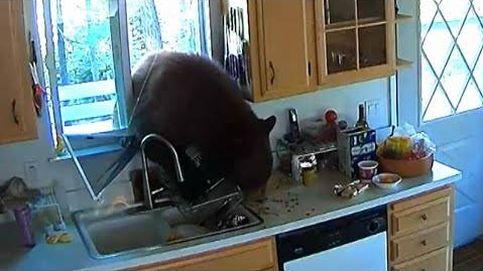 Un oso se cuela por la ventana de una cocina en California