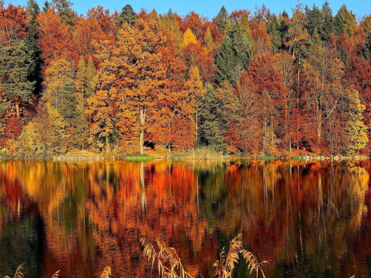 Foto: Nada otoña mejor que un bosque. (Unsplash/@rgaleria)