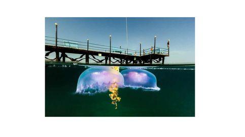 20 fotos en la frontera de dos mundo: bajo el agua y sobre ella