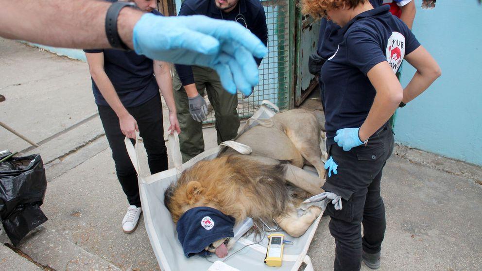 Una ONG rescata a 12 animales de uno de los peores zoológicos de Europa