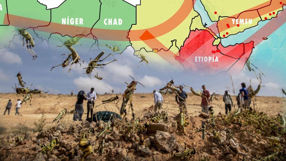 ¿Qué pasa con las langostas en África? La plaga bíblica de la que no para de alertar la ONU