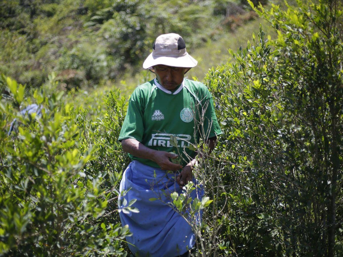 Foto: La región cocalera de los yungas siente un nuevo aire de libertad en bolivia