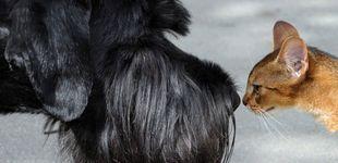 Post de Los humanos podrían transmitir el Covid-19 a perros, gatos y hurones