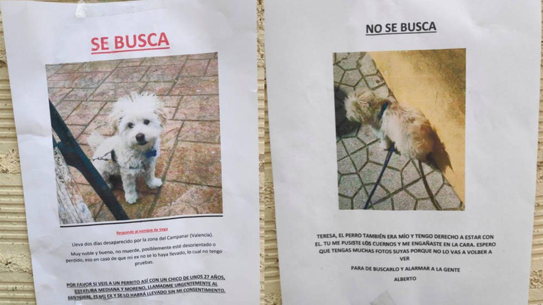 Un perro, atrapado en la guerra de carteles de sus dueños en Valencia