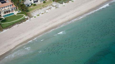 Miles de tiburones de punta negra invaden las aguas del sur de Florida