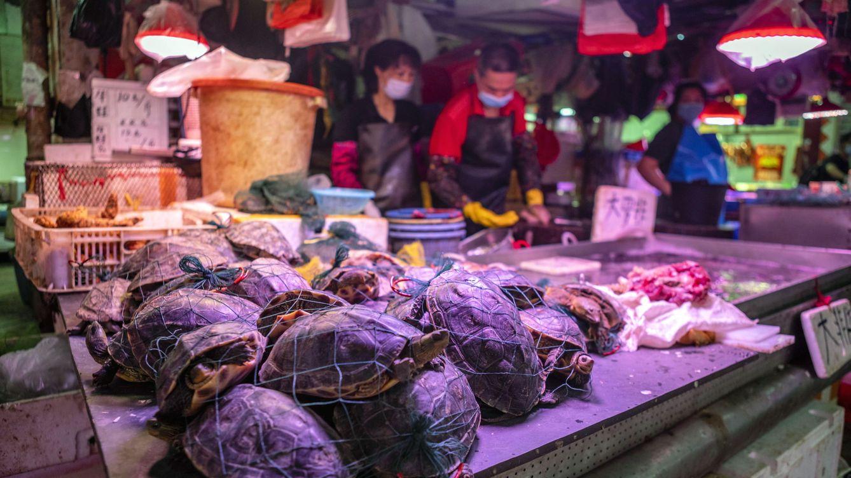 China empieza a dar subsidios para erradicar el tráfico de animales salvajes tras el covid-19