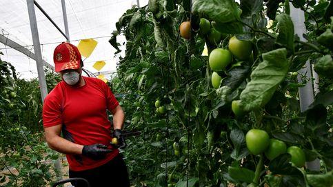 Moncloa planea permitir cobrar el paro y trabajar en el campo por la falta de jornaleros
