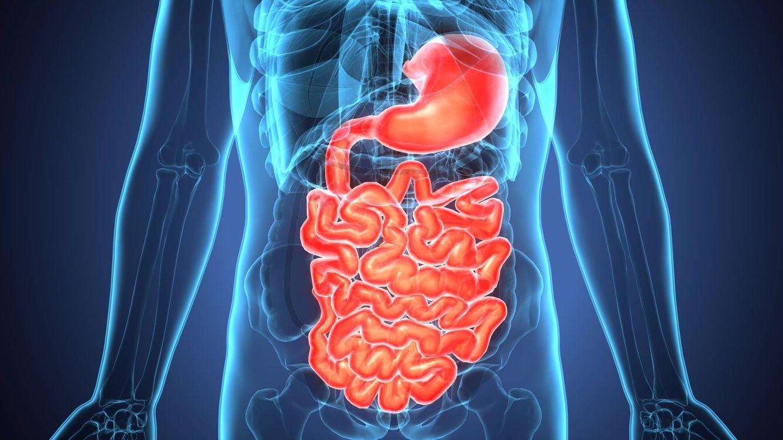 Cómo perder peso sin hacer dieta mejorando tu sistema digestivo