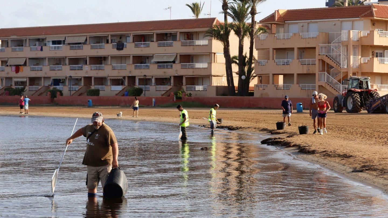 Voluntarios limpiando las aguas del Mar Menor. Foto: EFE
