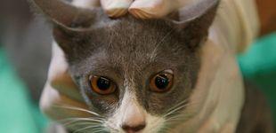 Post de El lado oscuro de trabajar como veterinario
