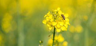 Post de Muere un septuagenario en As Nogais (Lugo) por la picadura de una abeja