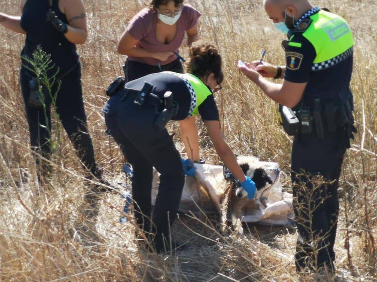 Foto: La Policía Local durante el rescate de Max. (El Rebrot de la Vida - FB)