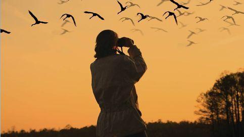 ¿Te va el birding? Dónde puedes espiar (y fotografiar) a los pájaros