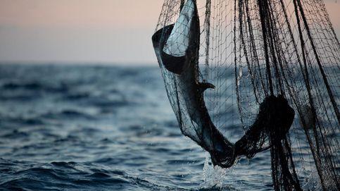 ¿Por qué España es líder mundial en el comercio de carne de tiburón?