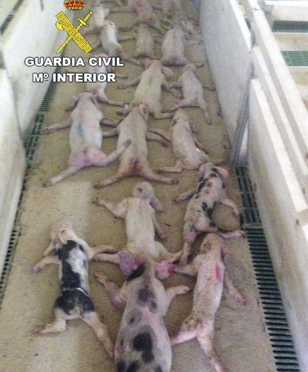 Foto: Los animales cuando les encontró la Guardia Civil. (Guardia Civil)