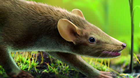 Descubren en Cuenca el mamífero con pelaje más antiguo