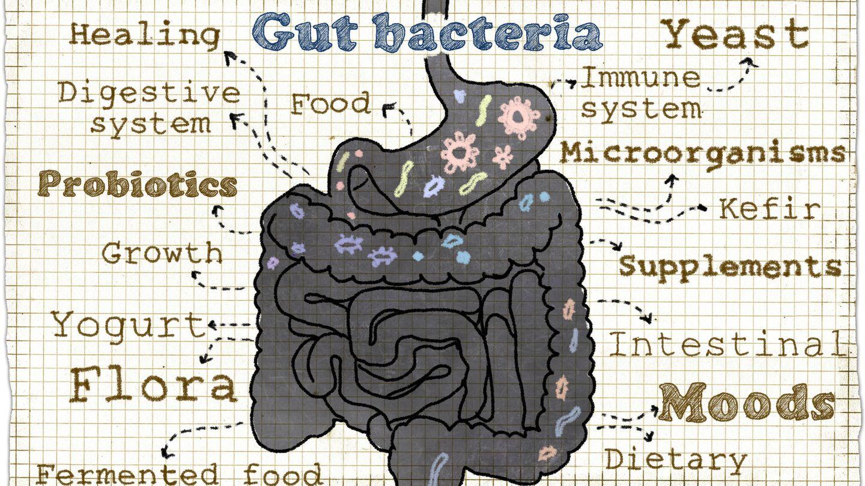 Bacterias intestinales.