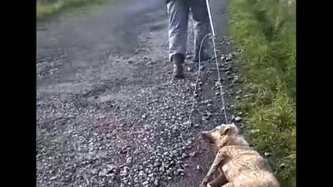 Un cazador apalea a su perra en Lugo: Disparo a quien me sale de los cojones