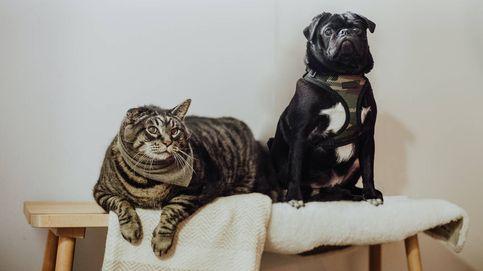 Chollos de Lidl para mascotas: disfruta de tu perro o gato este verano