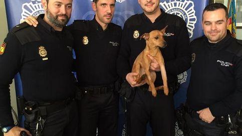 La Policía adopta y sufraga los cuidados de un perro al que rescataron de su maltratador
