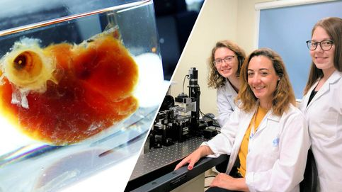 Las científicas españolas que han creado corazones transparentes para evitar infartos
