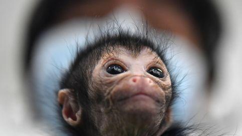 Mono araña, atendido en clínica de Cali