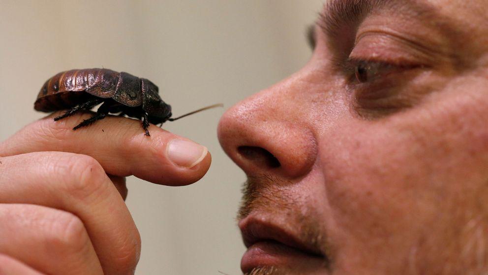 Venganza por San Valentín: un zoo pone a una cucaracha el nombre de tu ex