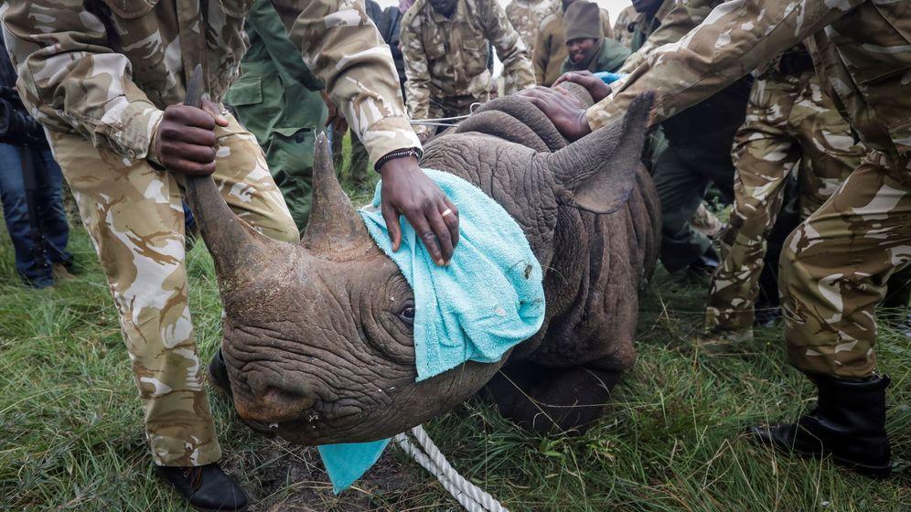 Foto: Los rinocerontes en Kenia también son perseguidos por los furtivos (EFE/Dai Kurokawa)