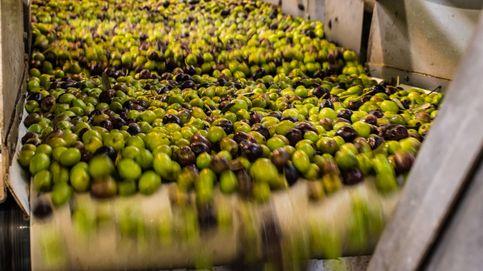 Aceite de orujo de oliva, una promesa futura contra el alzhéimer