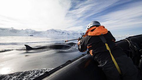 Así es la vida de las ballenas en la Antártida