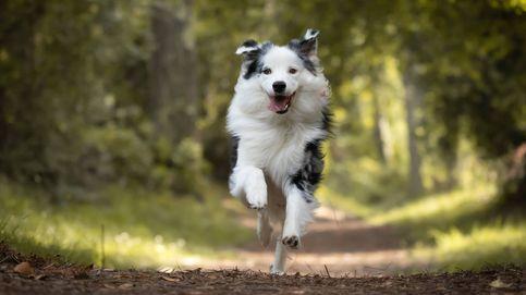 Por qué los perros y los gatos a veces corren 'como locos' sin razón aparente