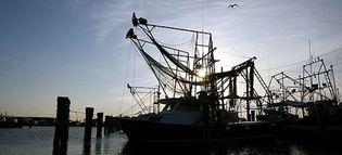Foto: La gastronomía de Luisiana, en peligro por el vertido de petróleo