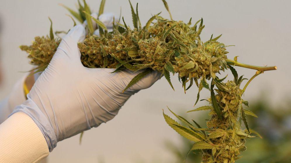 Foto: El cannabis, muy peligroso para los adolescentes (Reuters/Chris Wattie)